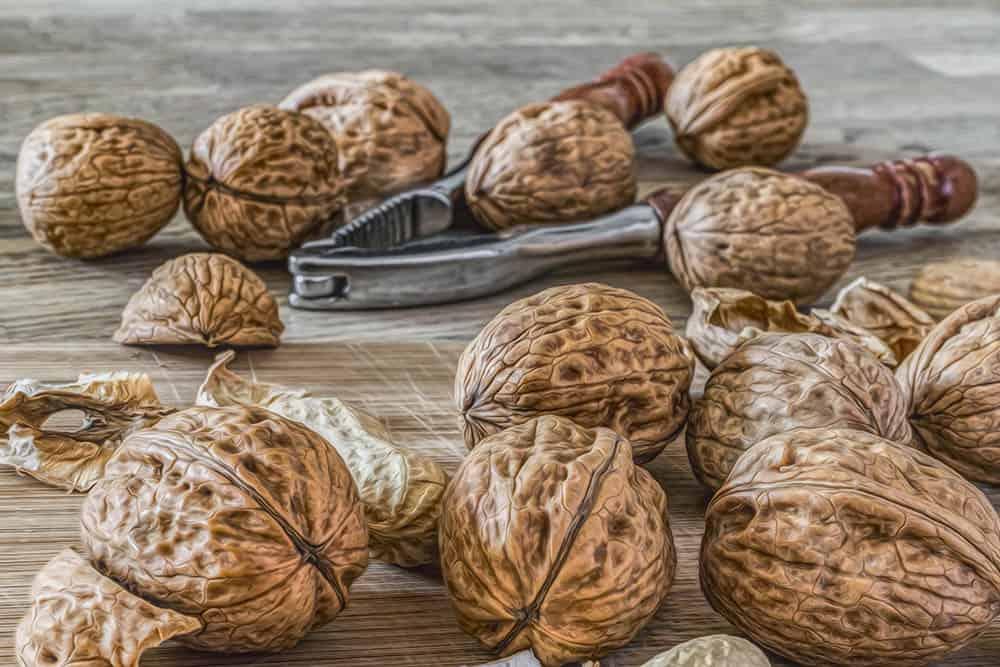 Best nut cracker